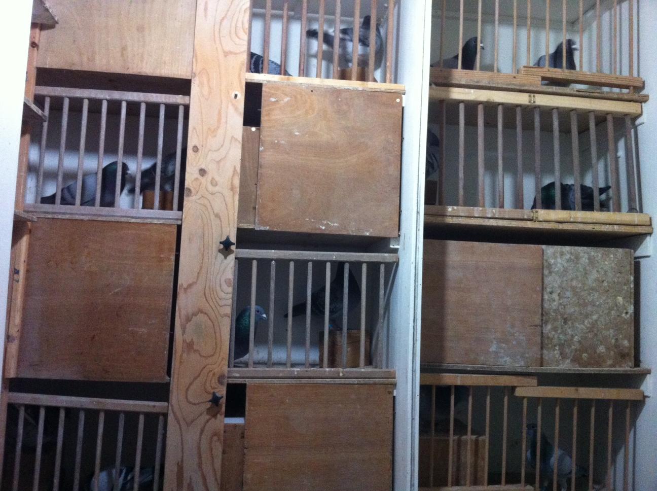 ramen te koop duivenhok